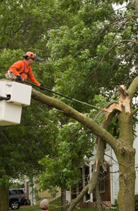 24 Hour Emergency Response Tree Service, Pruning, Logging, Vegetation Management, Stump Grinding, Chipping, Mulching