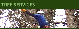 Tacoma, Puyallup, Seattle, Gig Harbor Tree Services