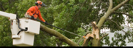 Woodland Industries Tree Services